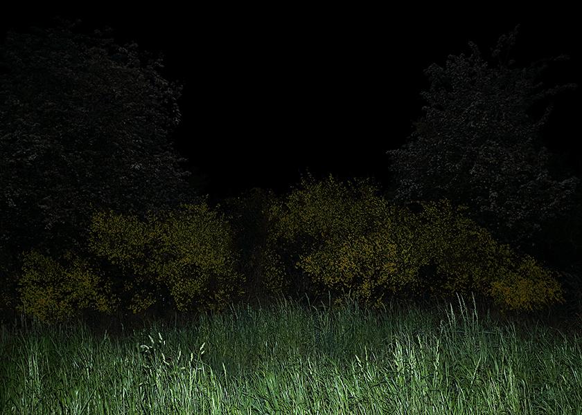 http://www.frederickcarnet.com/files/gimgs/219_whenthenightfalls011.jpg