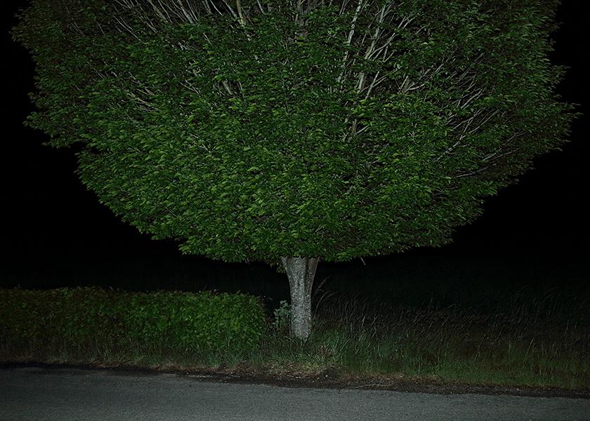 http://www.frederickcarnet.com/files/gimgs/219_whenthenightfalls062.jpg